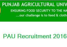 Punjab agriculture recruitment